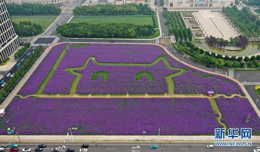 天津:紫色花海扮靓城市景观