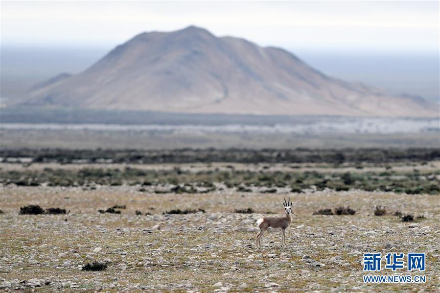 甘肃阿克塞:多措并举守护野生动物家园